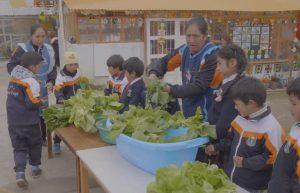 Pasco: escolares promueven cuidado del medio ambiente con biohuerto